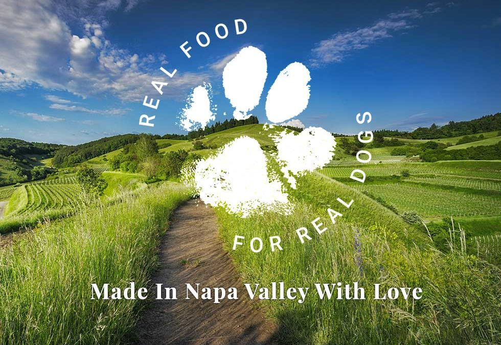 Napa Dog New Design – Will Be In Full Force Soon